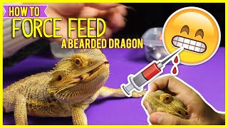 How To FORCE FEED A Bearded Dragon! | Pet Reptiles