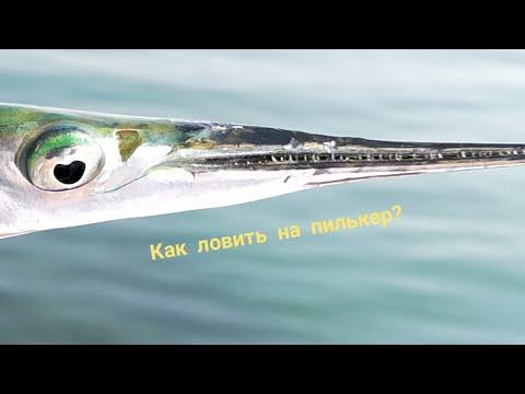 Ловим саргана  на Черном море.Основы ловли на спининг)