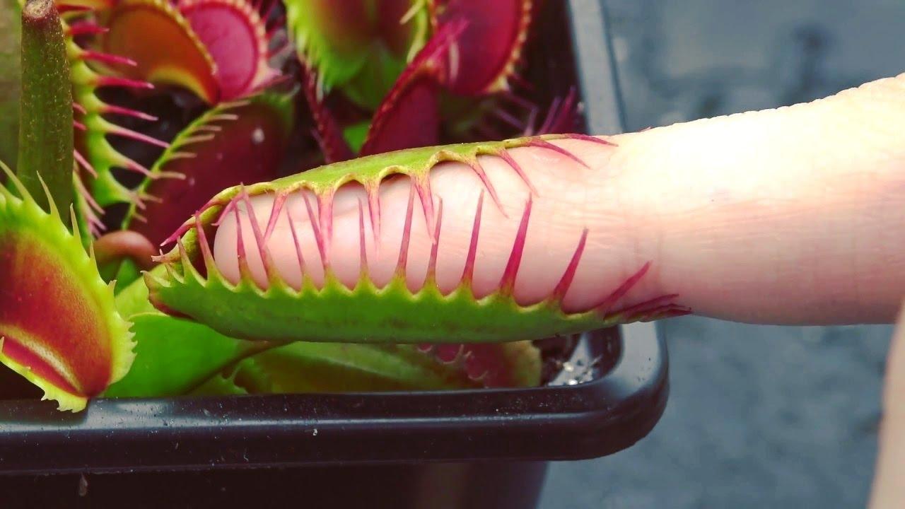 मांस खाने वाले पेड़ पौधे || Most Amazing Carnivorous ...