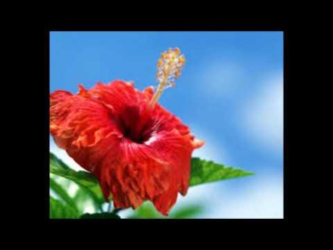 MATAHI - Qui a Tué BOB Marley?; Darling Faisons L'amour Ce Soir; Say You Say Me [Hula Medley Tahiti]