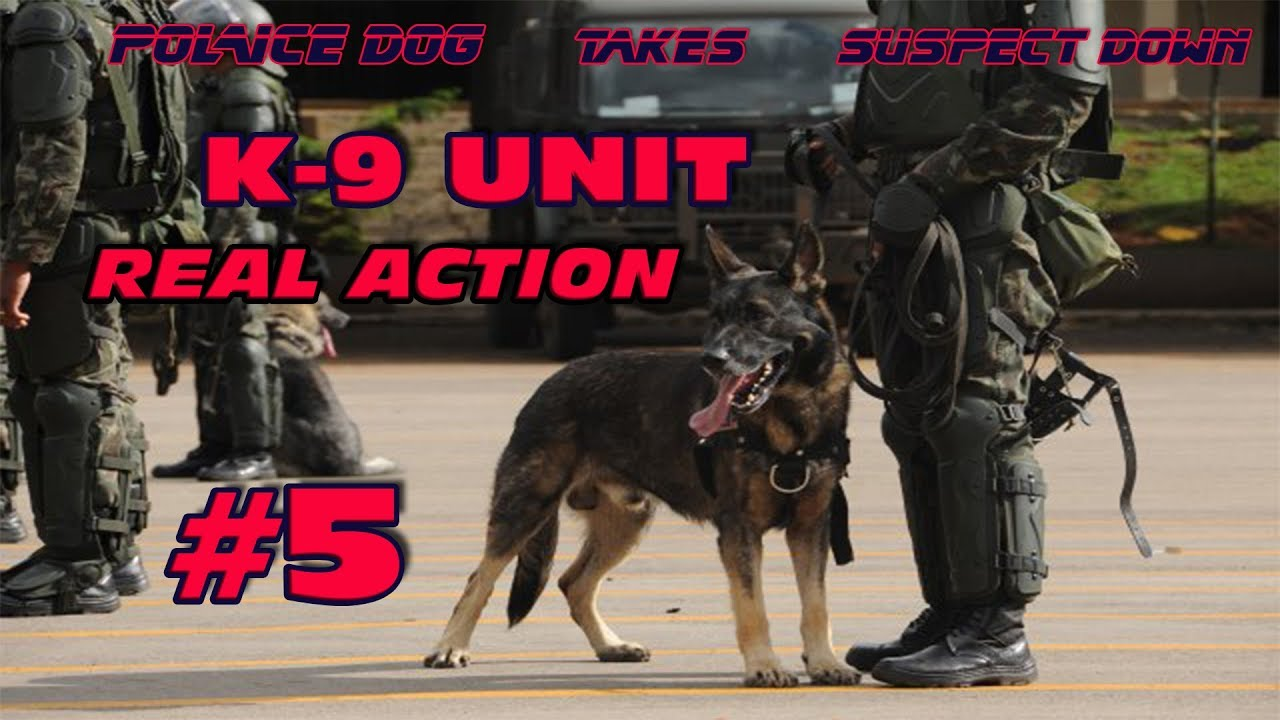 Download K-9 REAL ACTION 5   Police Dog Takes Suspect Down