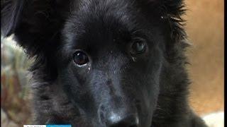 Закон о безнадзорных животных