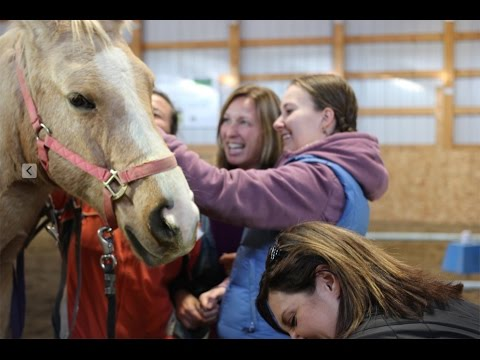 High Performance Coaching Workshops in Calgary and How They Work With a Horse