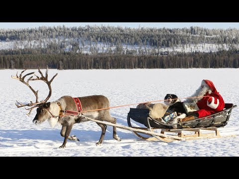 Santa Claus Reindeer Land Pello In Lapland: Discover Reindeer Dog Of Father Christmas In Finland