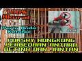 Cara Membedekan Poksay Hongkong Jantan Dan Betina Birdsong  Mp3 - Mp4 Download