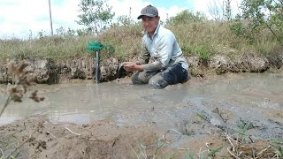 Đi đào hang thụt Bắt Cá Lóc Đồng dưới đường kênh vào mùa khô như vậy mới đã