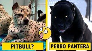 10 Razas de perros aterradoras creadas por humanos