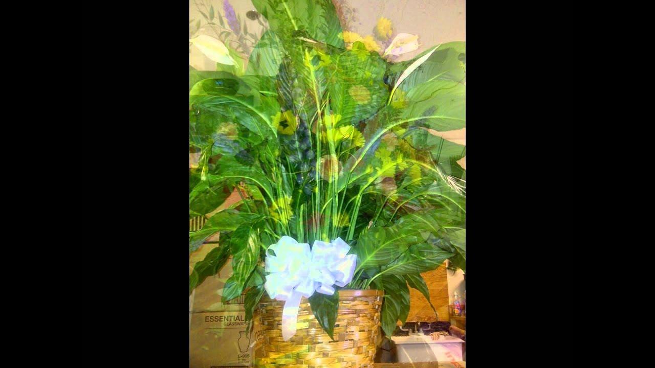 Altamonte Springs Florist Altaflorist 407 786 7300 Youtube