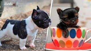 Los 6 perros más pequeños del mundo