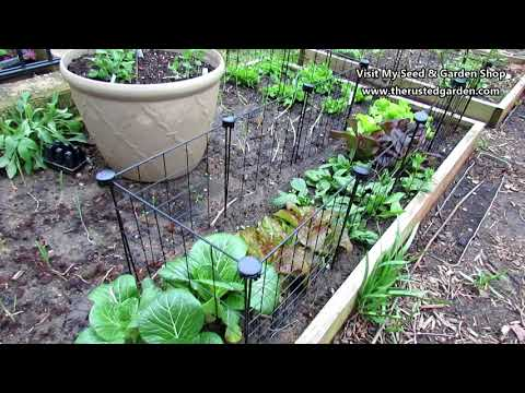 Gardening 101 Ep6: Staking, Trellising, Growing Vertically & Examples