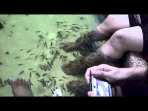Tara ging doctor fish