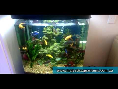 Aqua One 620T Cichlid capacity tips Aquarium Adven