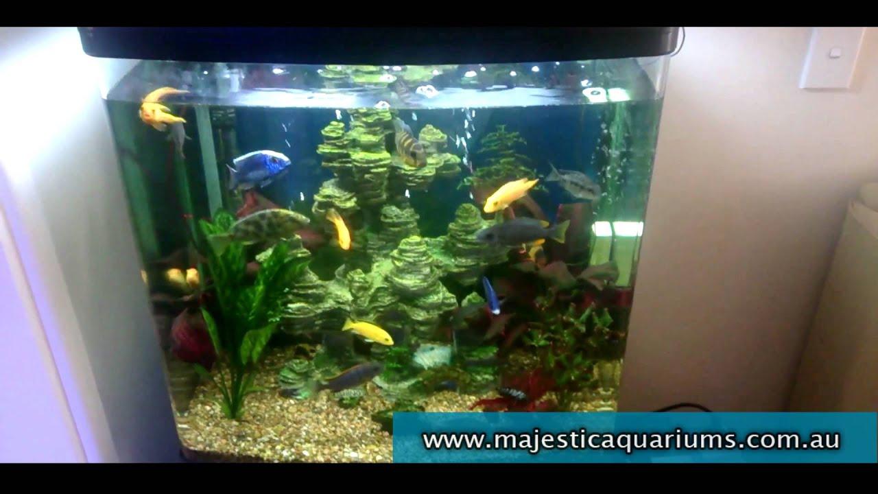 Freshwater aquarium fish capacity - Aqua One 620t Cichlid Capacity Tips Aquarium Adven