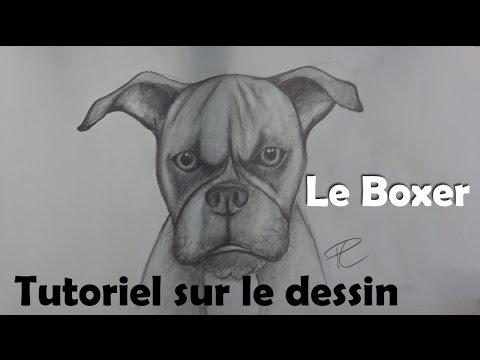 Tutoriel sur le dessin l 39 animal domestique le boxer youtube - Dessin chien boxer ...