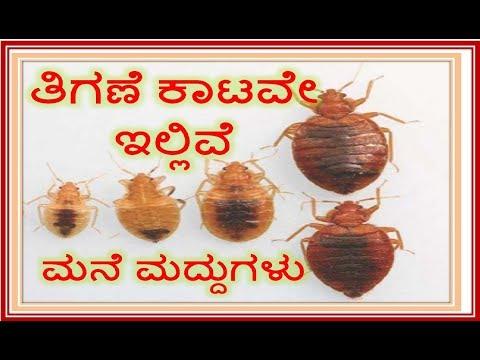 À²¤ À²—ಣ À²—ಳ À²• À²Ÿà²• À²• À²¶ À²¶ À²µà²¤ À²ªà²° À²¹ À²° How To Kill Bed Bugs In Kannada Thigane Kata Tigane Thigane Youtube