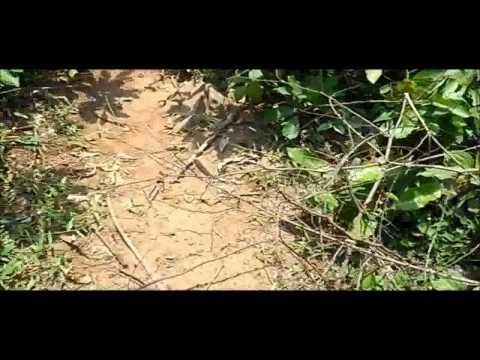 Panchalingeswar, Nilgiri, Chandipur, Kuldiha Forest, Devkund  in Orissa. - Part 8