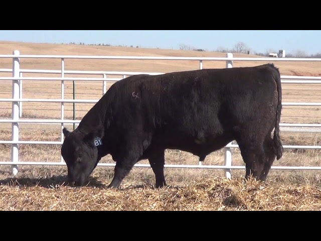 Express Ranches Lot 81