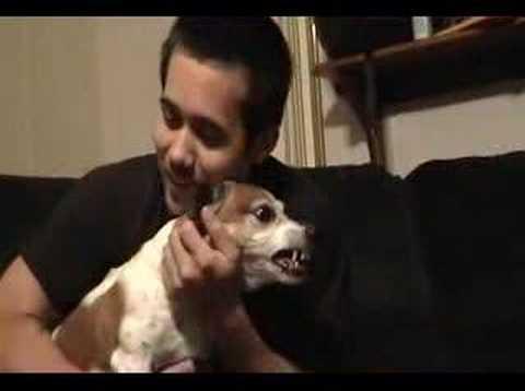 Psycho Dog, Devil Dog