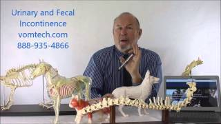 Video Information on Urinary and Fecal Incontinence Therapy VOM download MP3, 3GP, MP4, WEBM, AVI, FLV Juli 2018
