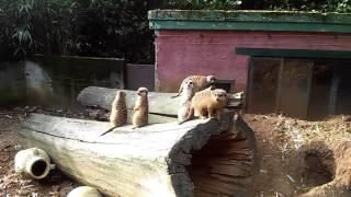 Olmense Zoo Belgie in Olmen