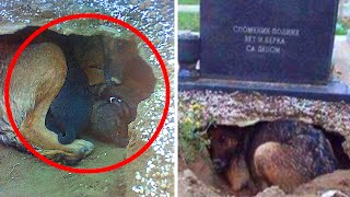 A Dog Was Thought To Be Guarding Her Owner's Grave