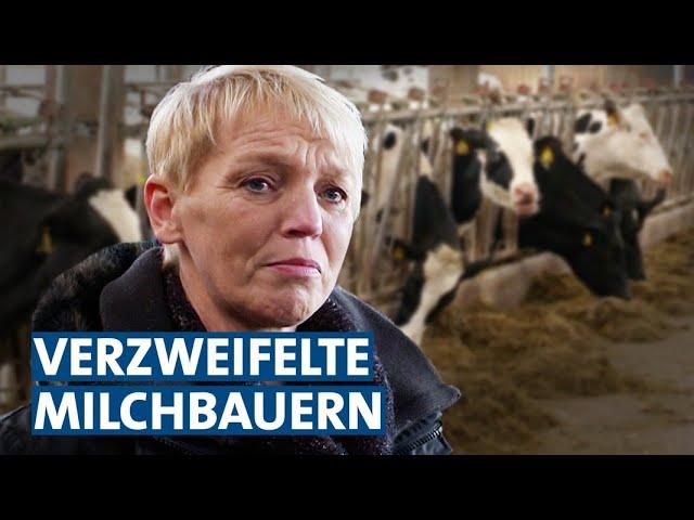 Die niedrigen Milchpreise