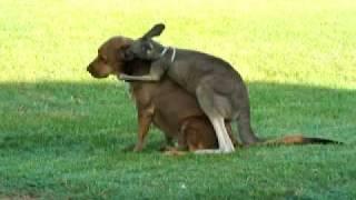 アニマルフレンズ感炸裂。後ろからムギュッ!カンガルーが犬に抱きつく瞬間が頭ポンポンを超えるレベル