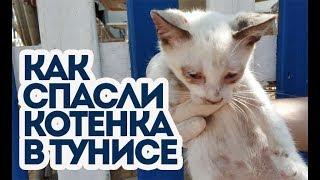 Гнойного котенка спасли в Тунисе. Русские спасли котенка.
