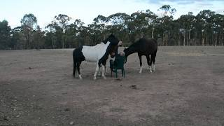 Teaching Horses respect - How about humans learning respect from horses