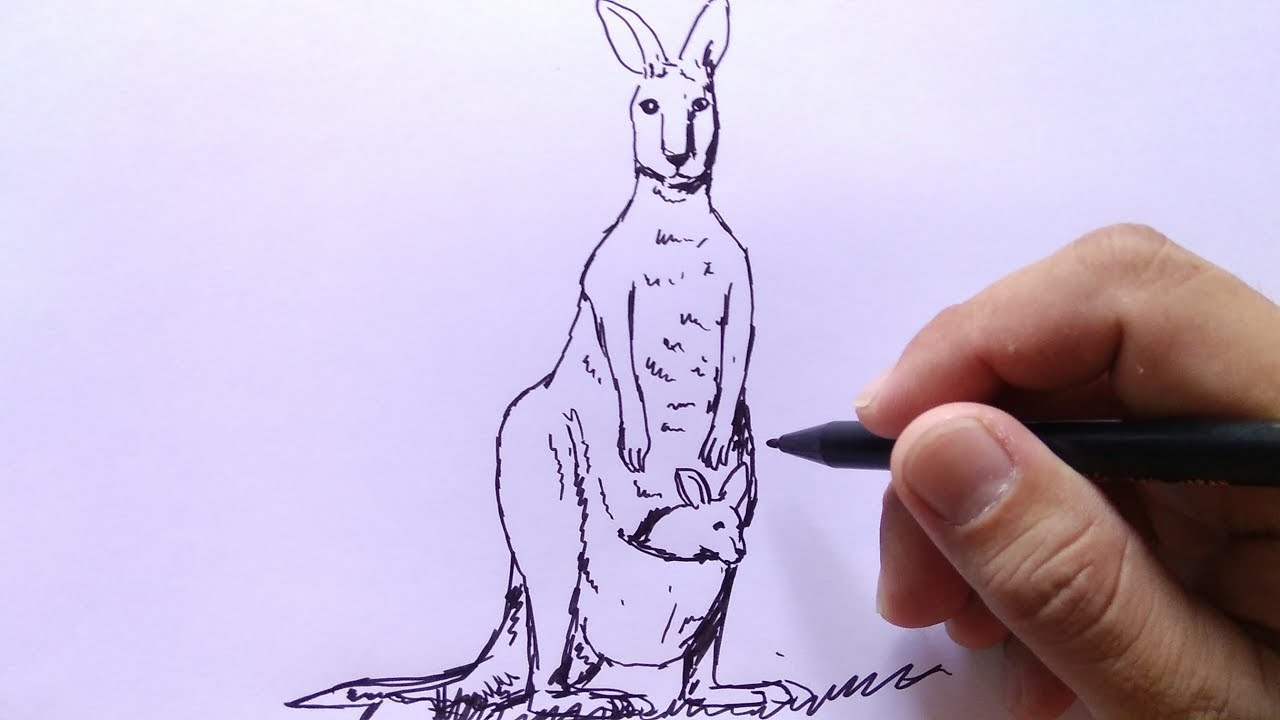 Cara Menggambar Kangguru