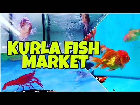 KURLA FISH MARKET | BIGGEST FISH MARKET IN MUMBAI | AQUA PLANET