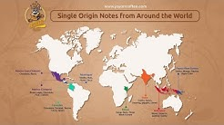 What's Special About Single Origin Coffee?