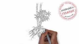 Как нарисовать корни дерева поэтапно простым карандашом(Как нарисовать картинку поэтапно карандашом за короткий промежуток времени. Видео рассказывает о том,..., 2014-07-12T05:36:32.000Z)