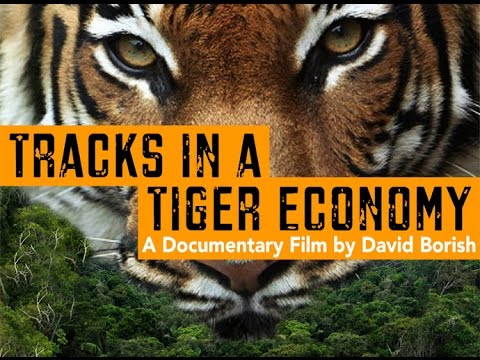 Tracks in a Tiger Economy
