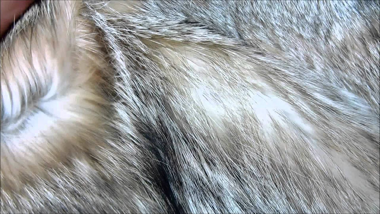 Image result for wolf fur close up