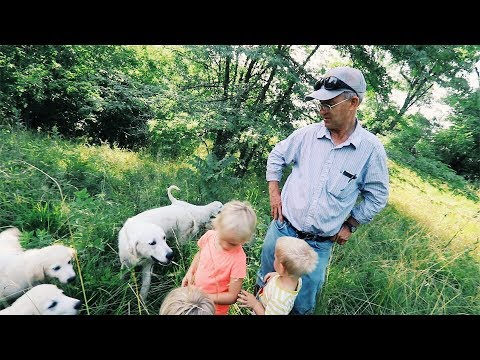 Greg Judy's KEY to SUCCESS  With LiveStock Guardian DOGS