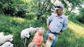 Greg Judy's KEY to SUCCESS - With LiveStock Guardian DOGS