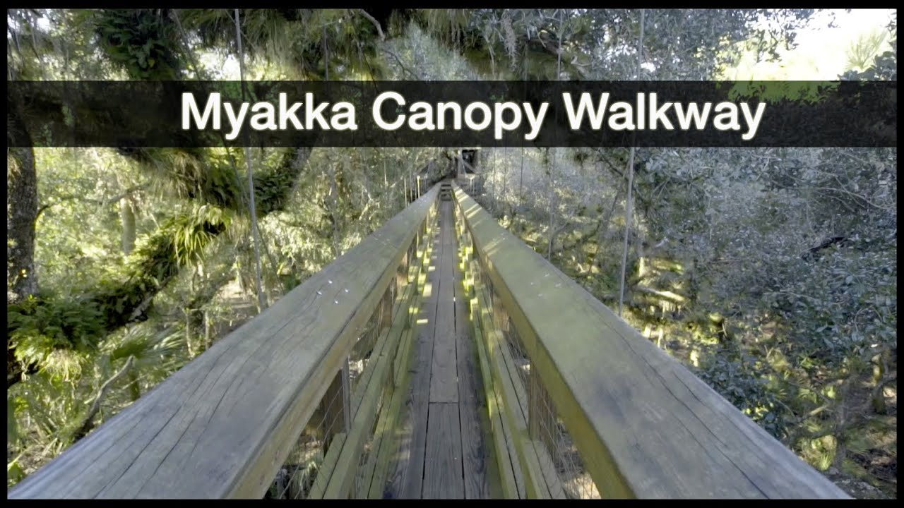 & Myakka River State Park - Canopy Walkway - YouTube