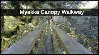myakka river state park canopy walkway