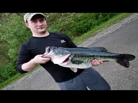 New KY State Record Largemouth Bass -