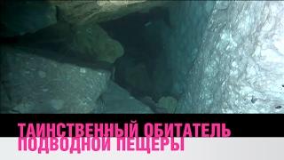 Таинственный обитатель подводной пещеры