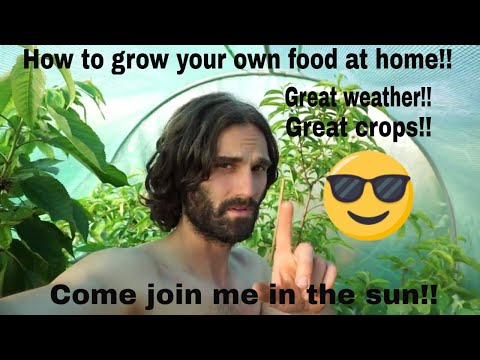 How to grow your own food at home! Dans allotment show