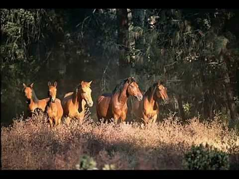 '' WILD HORSES ''   THE SONGS OF  JIM WHITMAN.