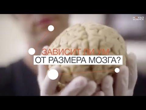 Вопрос: У какого млекопитающего самый большой мозг и сколько он весит?