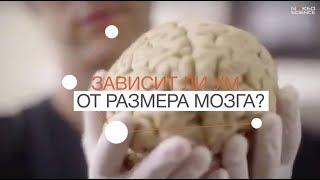 зависит ли ум от размера мозга?
