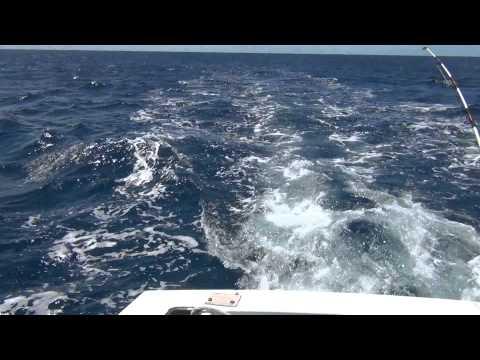 Deep Sea Fishing   St  Kitts   March 2014  2