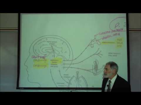 RESPIRATORY PHYSIOLOGY; REGULATION OF BREATHING by Professor Fink