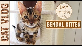 VLOG Bengal Kitten Day In The Life // How To Write A Cat Cozy Mystery - 10 Cat Cozy Mystery Ideas