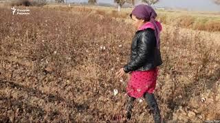Оққўрғонда икки фермер кредитни қайтаролмагани учун Тоштурмага ташланди