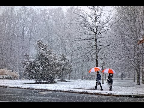 One winter day in McLean, Virginia